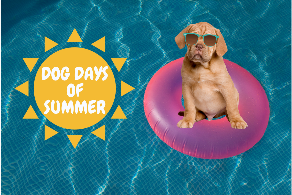 dog days of summer pool